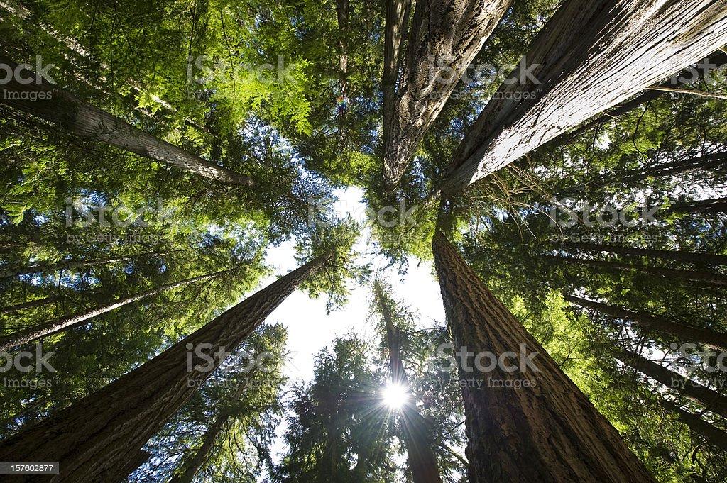 Coastal Temperate Rain Forest royalty-free stock photo