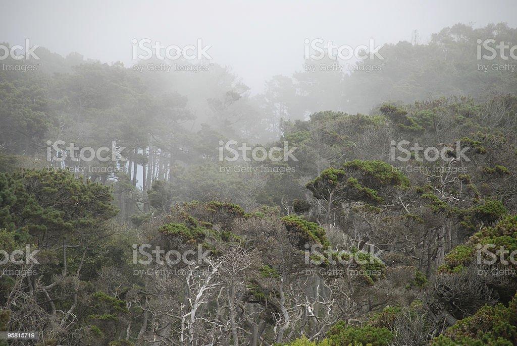 Coastal Trees in the Mist royalty-free stock photo