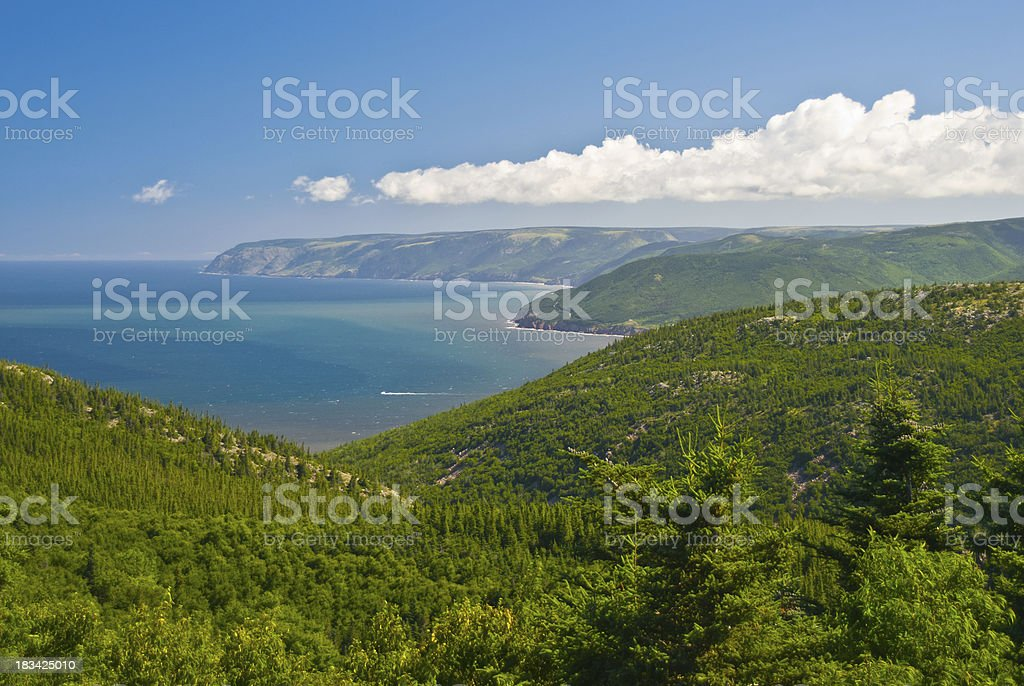 Coastline and the forest stock photo