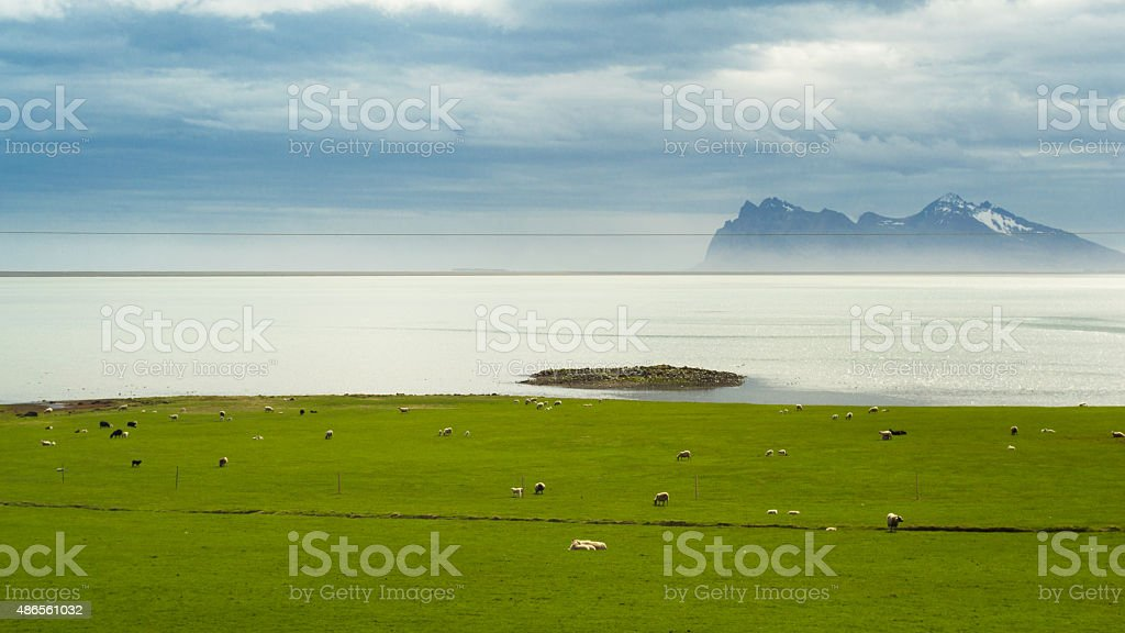 Coastline ath the shore of South Iceland stock photo