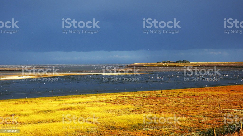 Coastline of Texel stock photo