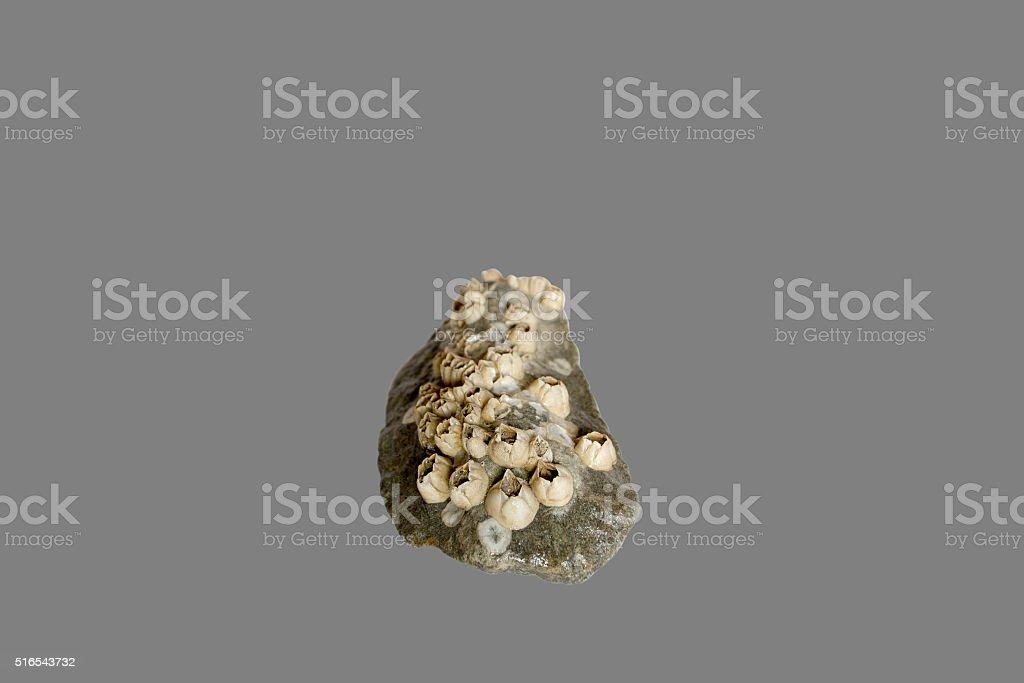 cobblestone out of the sea stock photo