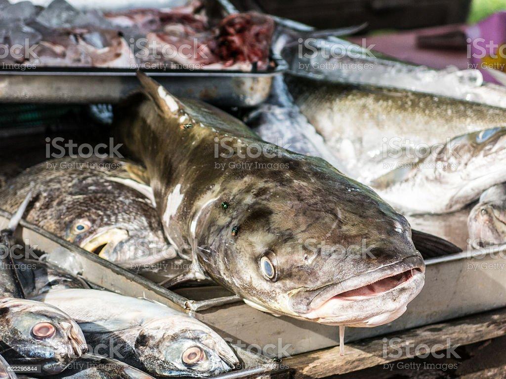 Cobia (Rachycentron canadum) Perciform Fishmonger Seafood Raw Food Catch stock photo