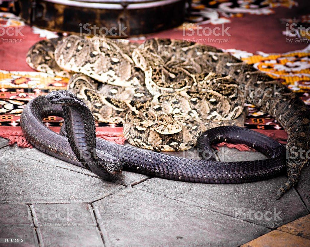 Cobra in Marrakech stock photo