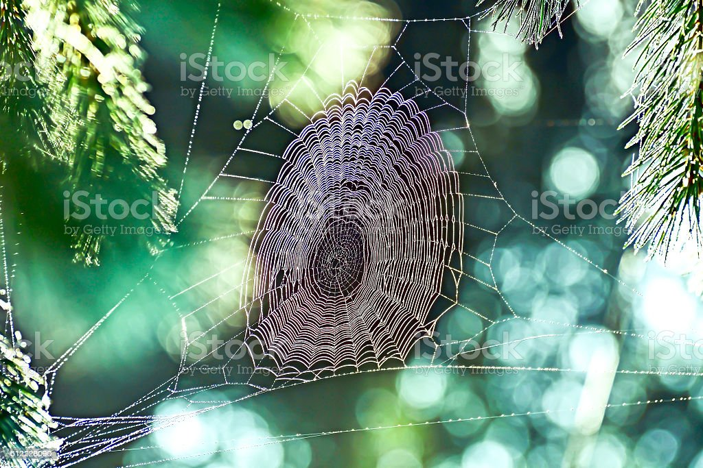 Cobweb in the sunlight stock photo