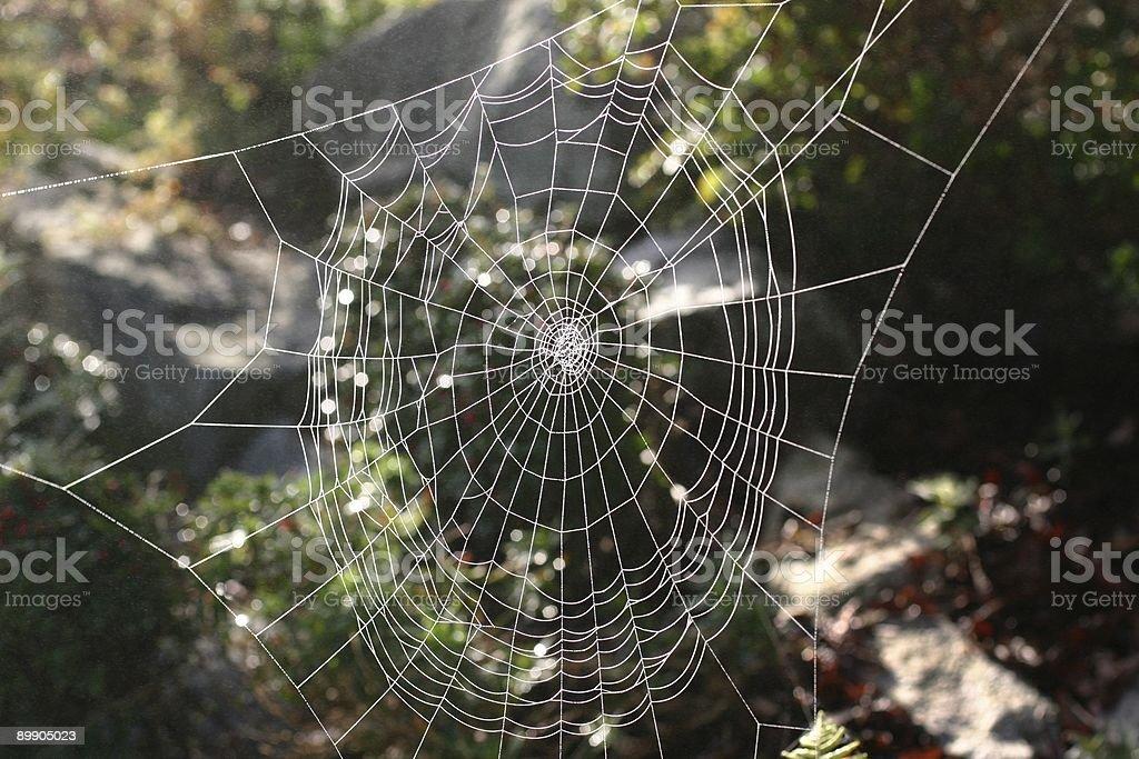 Cobweb Pattern stock photo