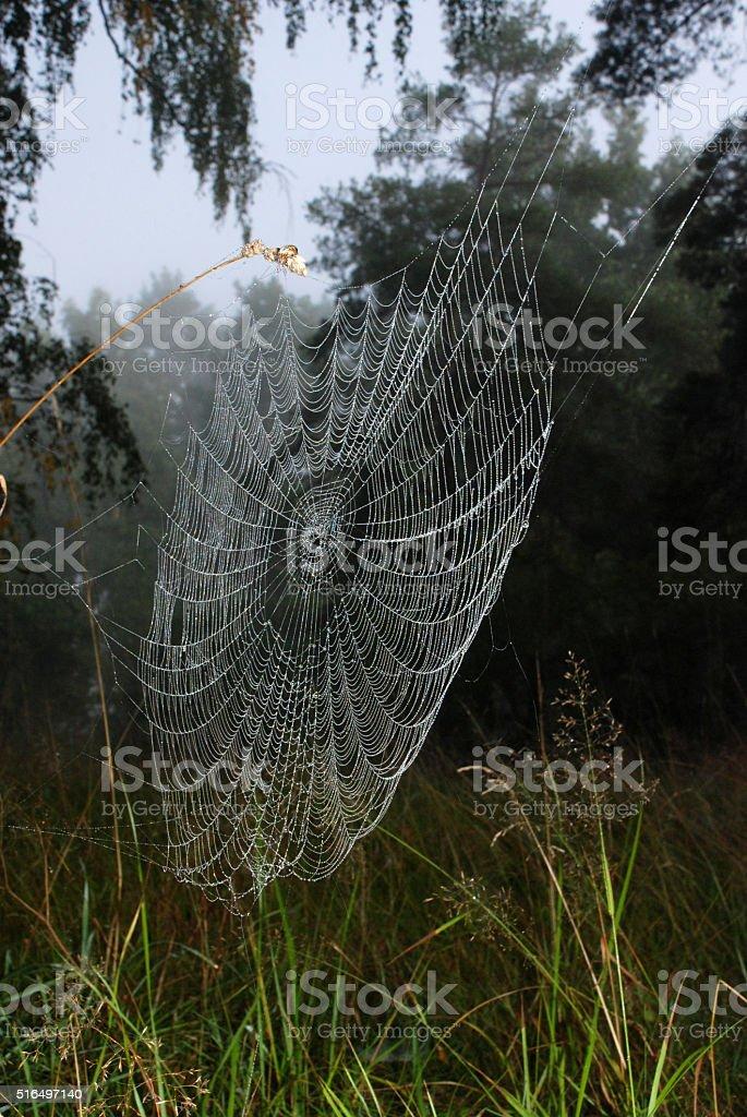 Cobweb / Shining water drops on spiderweb in autumn morning stock photo