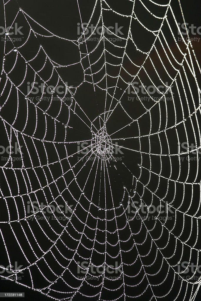 Cobweb with dew #3 royalty-free stock photo