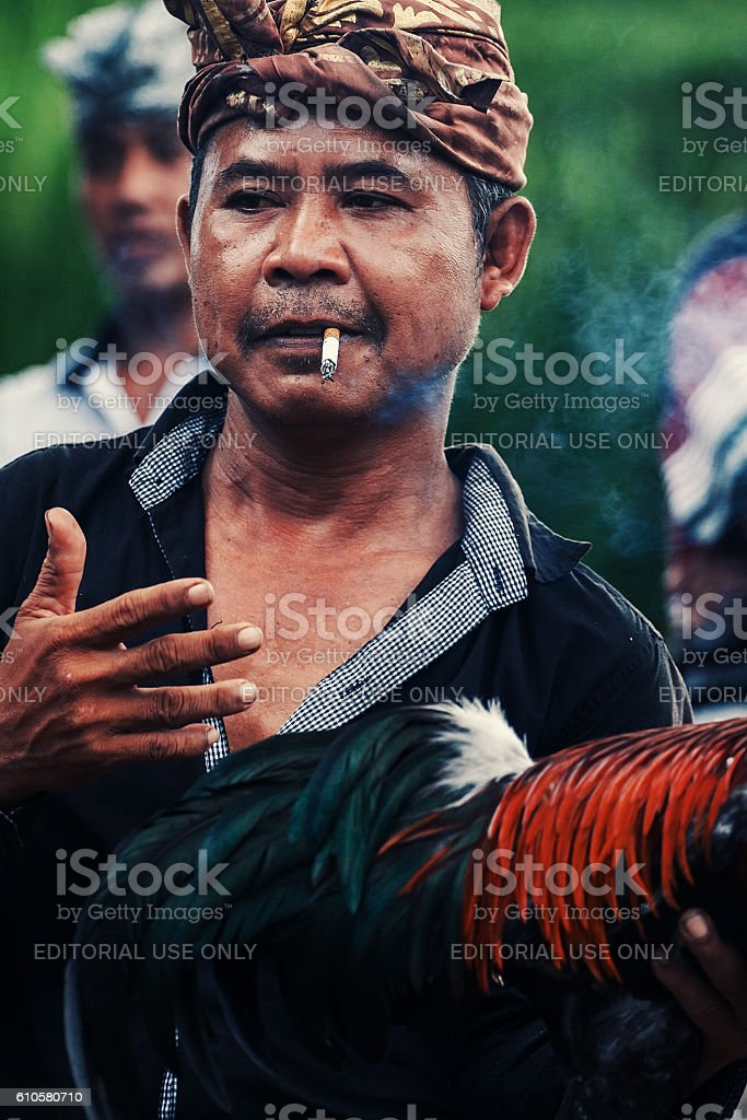 Cock Fighting in Bali, Indonesia stock photo