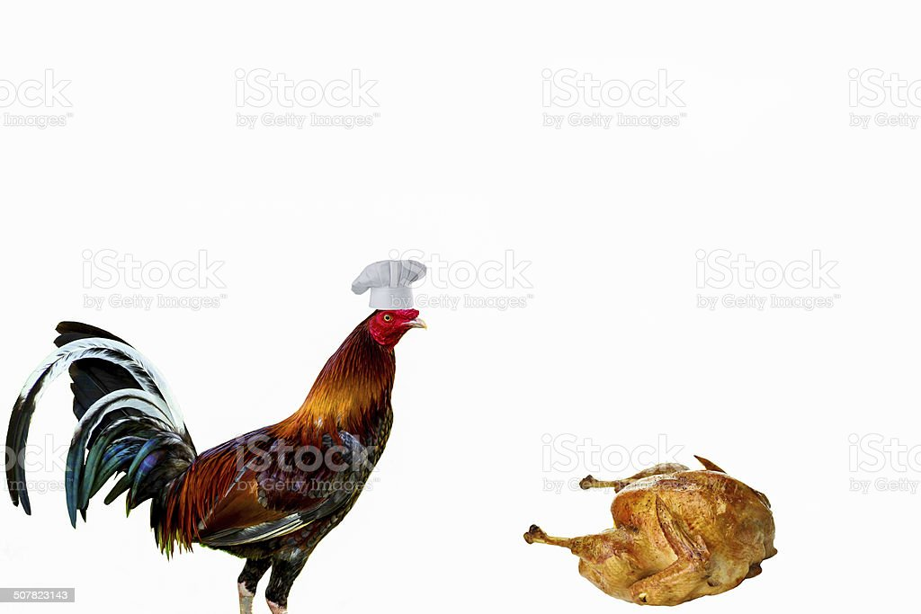 cock in a chef hat standing over a cooked turkey stock photo