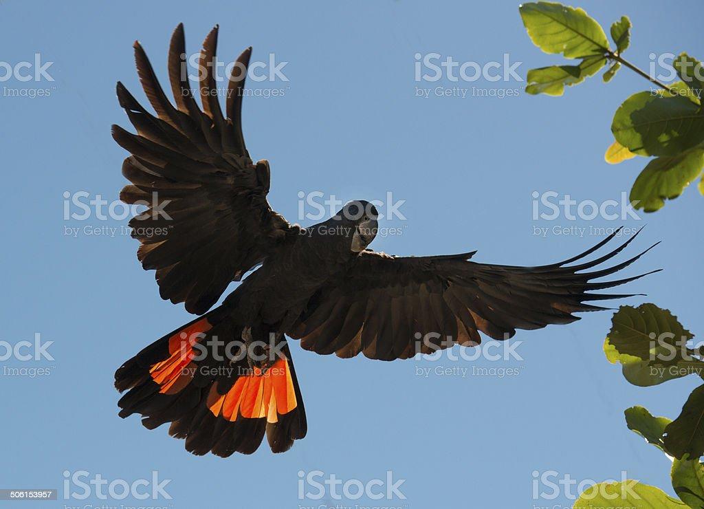 Cockatoo stock photo