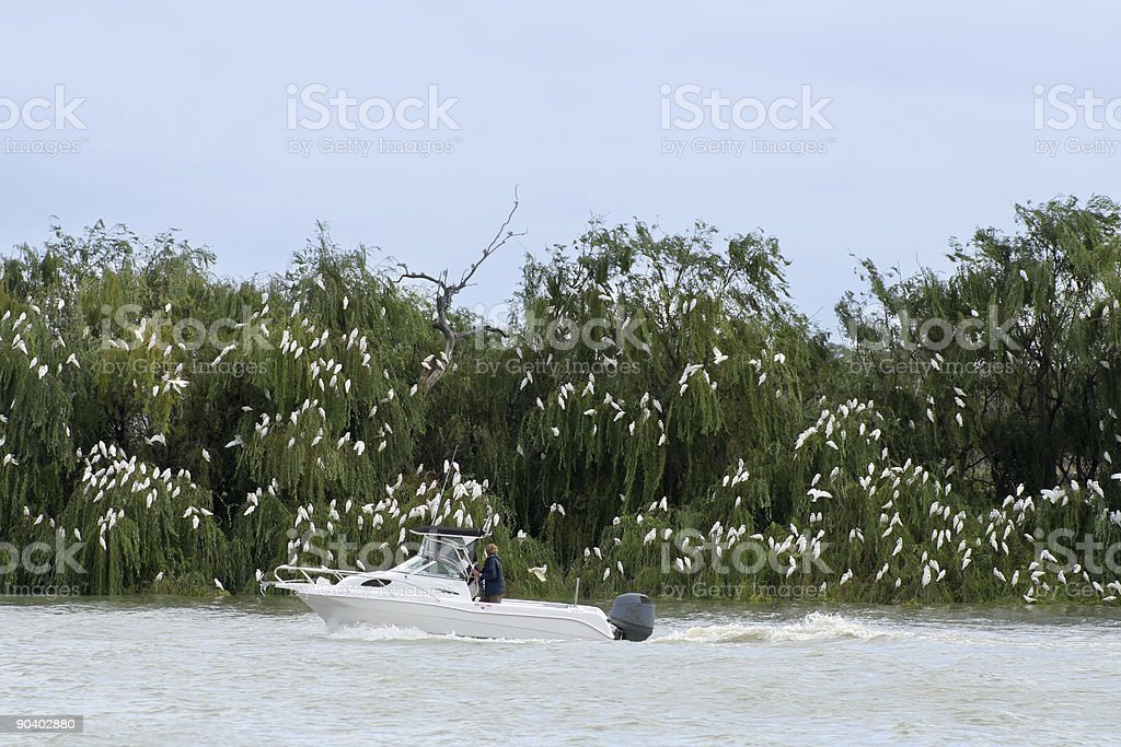 Cockatoos with boat stock photo