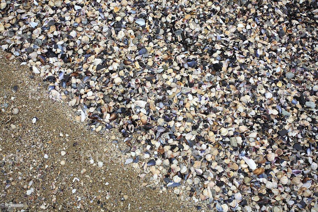 Cockleshell Beach Surface royalty-free stock photo