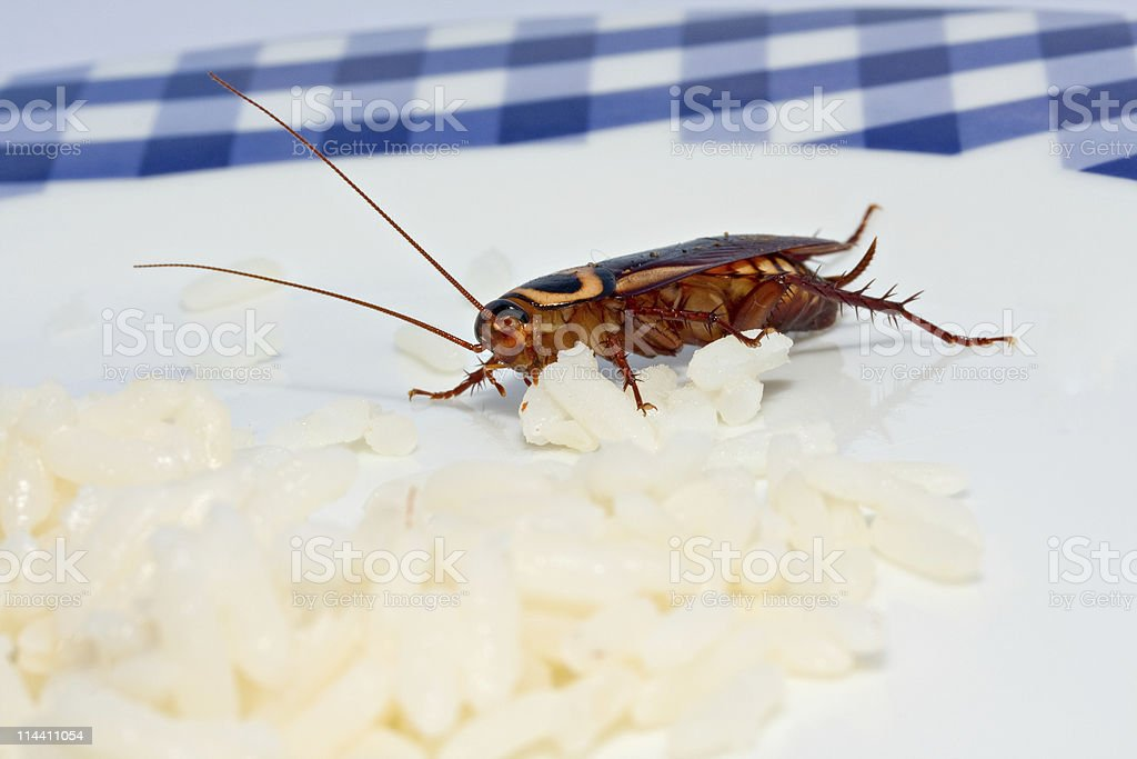 cockroach cuisine royalty-free stock photo