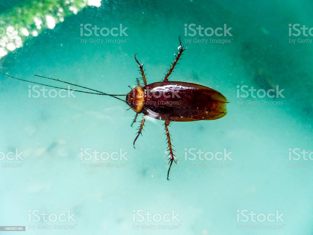 Cockroach Insect stock photo