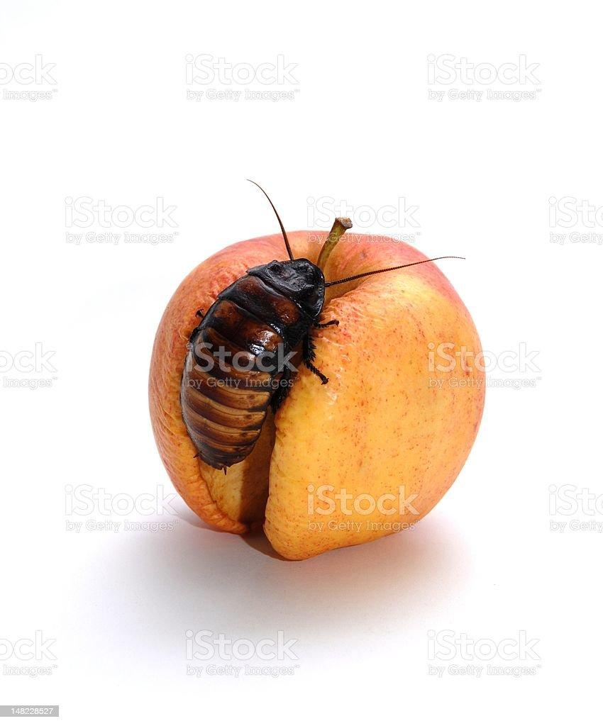 Cockroach on Apple stock photo