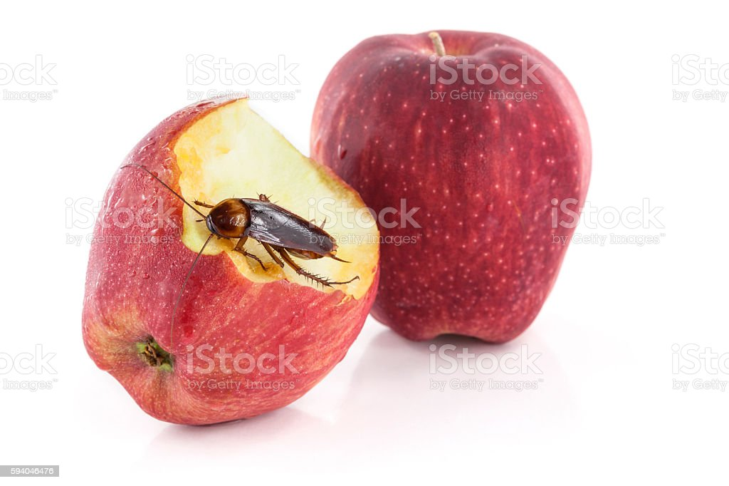 cockroach sitting and eating on a red apple, stock photo