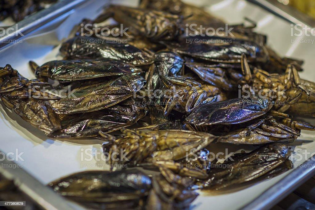 Cockroaches on the Thai market royalty-free stock photo