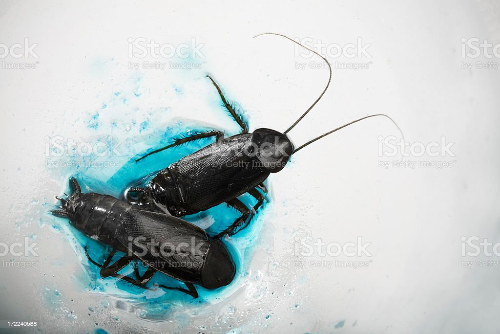 Cockroaches royalty-free stock photo