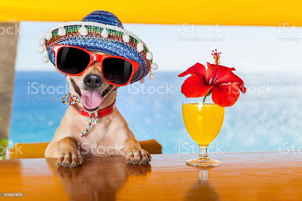 cocktail dog stock photo