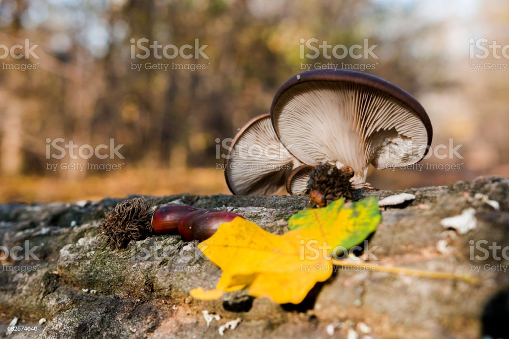 Cocktail of mushroom color and acorn stock photo