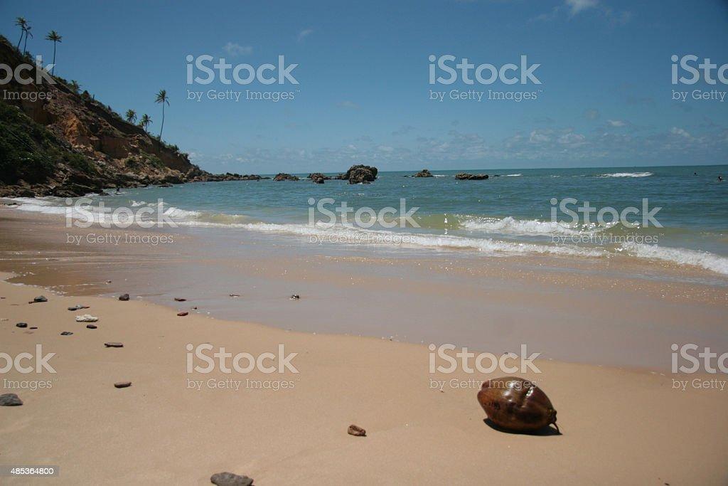 Coco en la playa zbiór zdjęć royalty-free