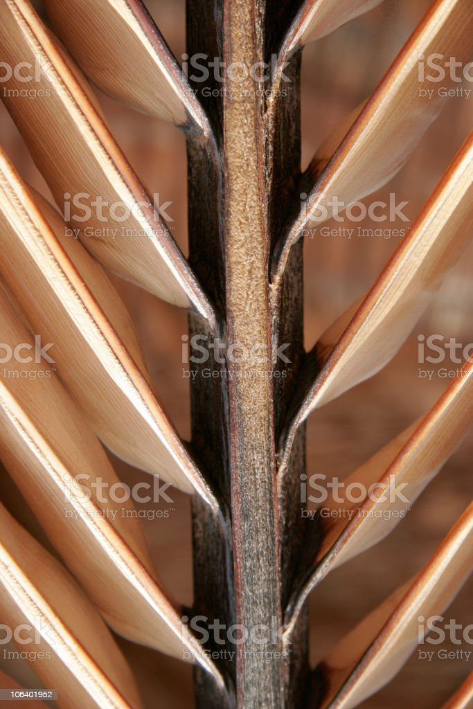 Coco palm leave royalty-free stock photo