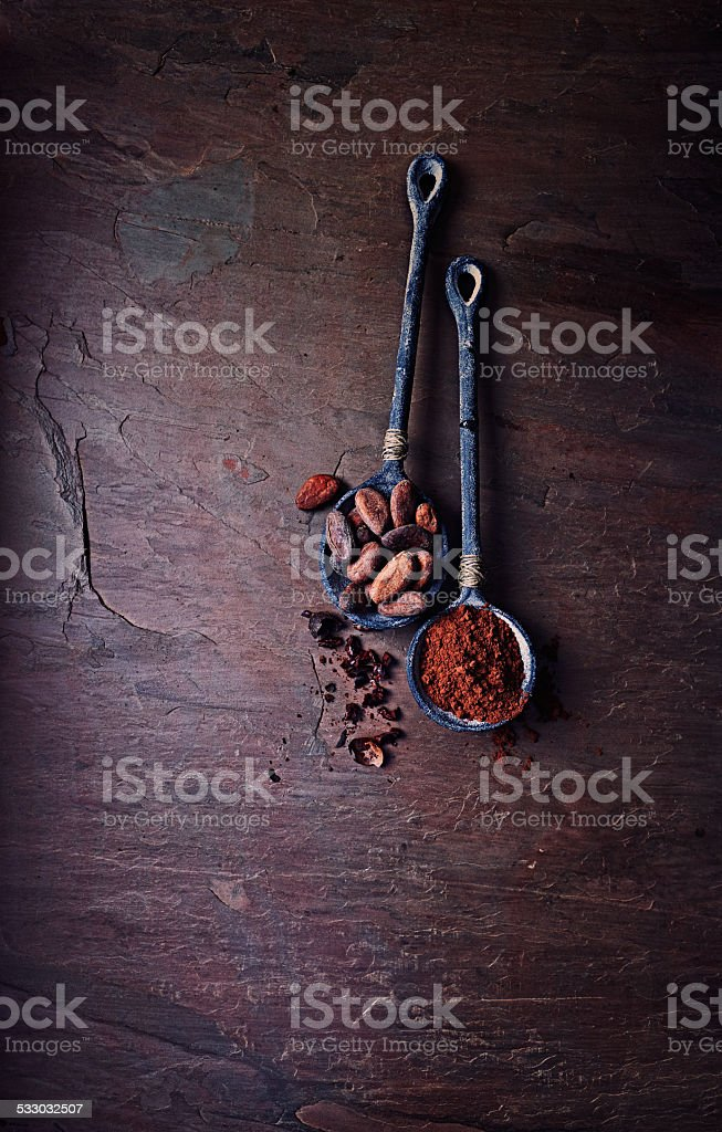 Cocoa beans and cocoa powder on iron spoons stock photo