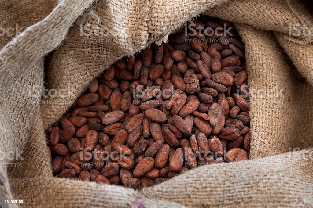 Cocoa beans in a jute bag stock photo