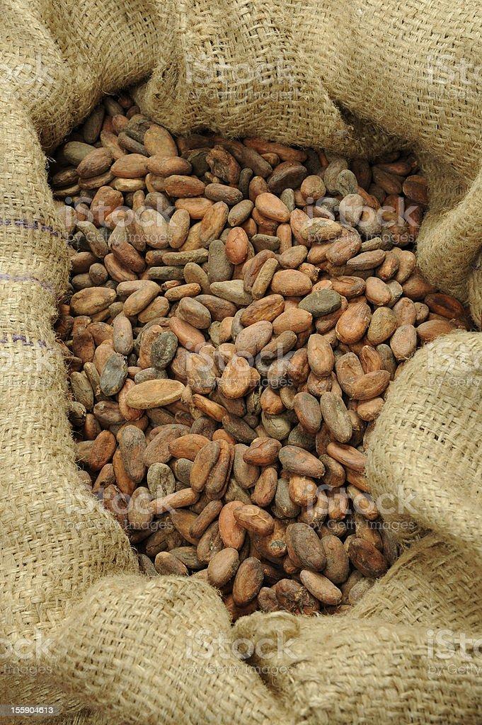 Cocoa beans royalty-free stock photo