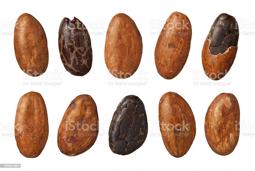 Cocoa Beans with a clipping path stock photo