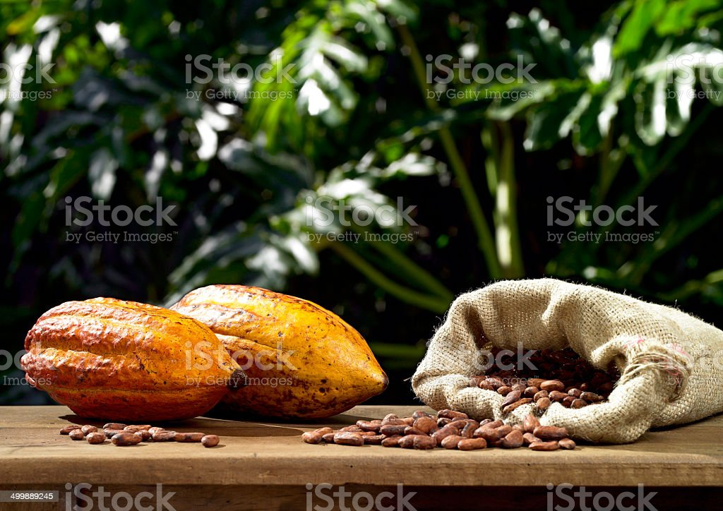 Cocoa Fruit and seeds stock photo