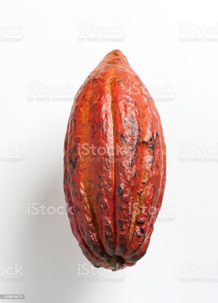 Cocoa fruit stock photo