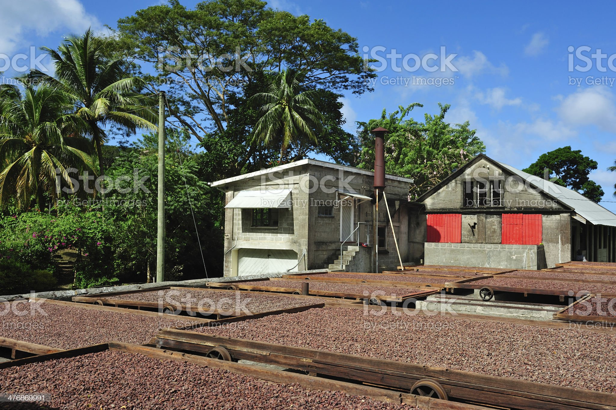 Cocoa Plantation On Grenada royalty-free stock photo