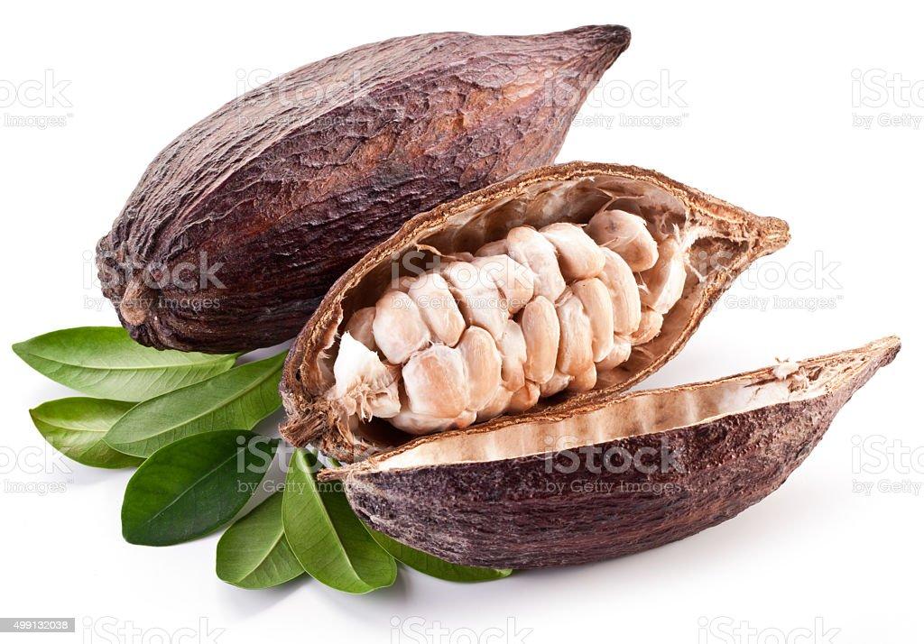 Cocoa pod on a white background. stock photo
