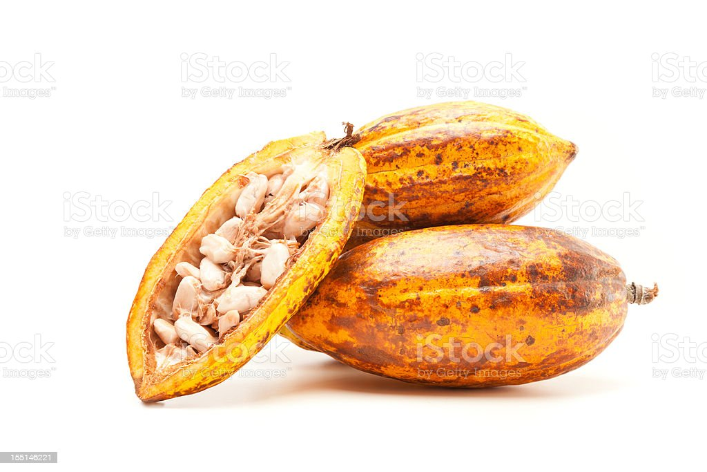 cocoa pods on white royalty-free stock photo