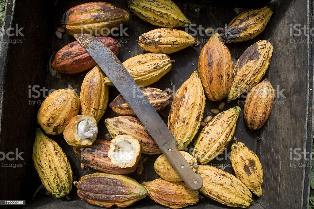 Cocoa Pods with Machete stock photo