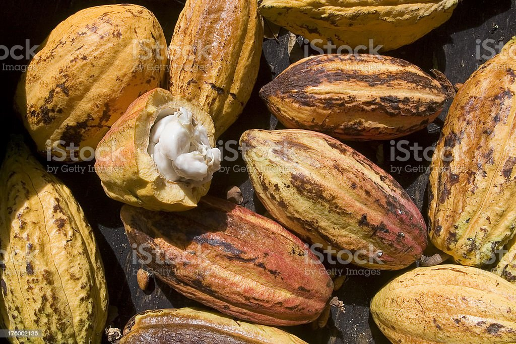 Cocoa Pods with Seeds stock photo