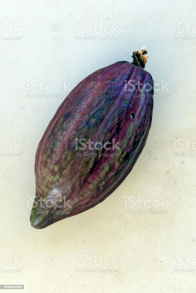 Cocoa, raw material for the manufacture of chocolate stock photo