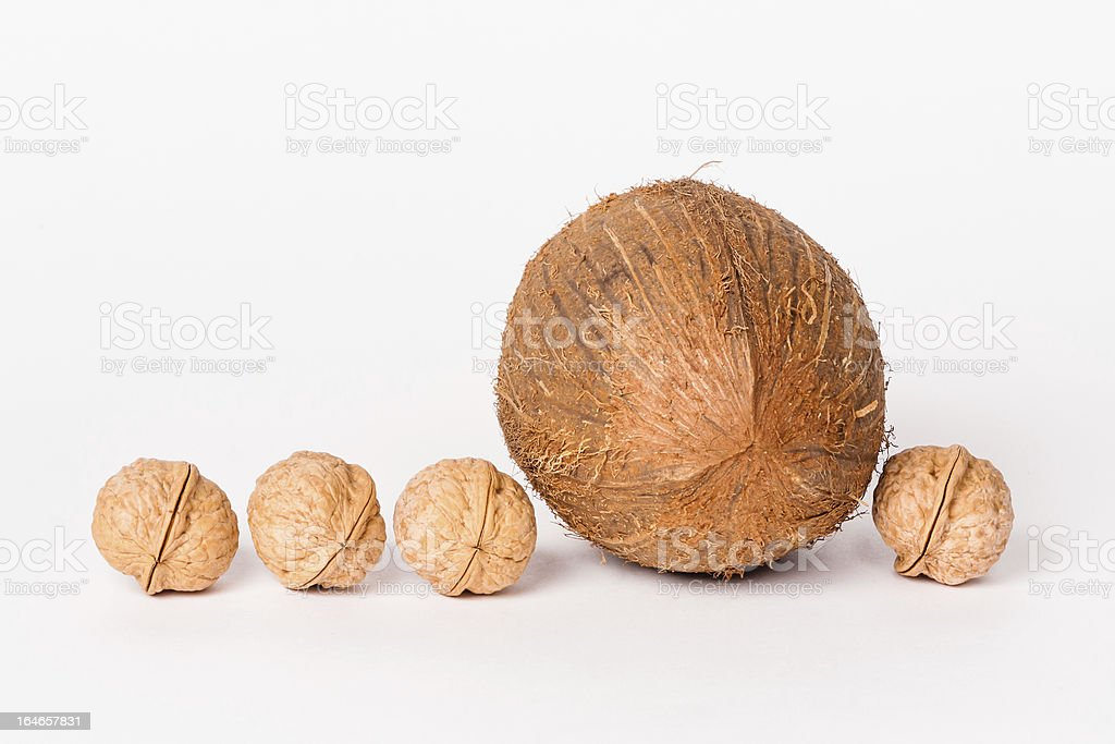 Coconut and four walnuts royalty-free stock photo
