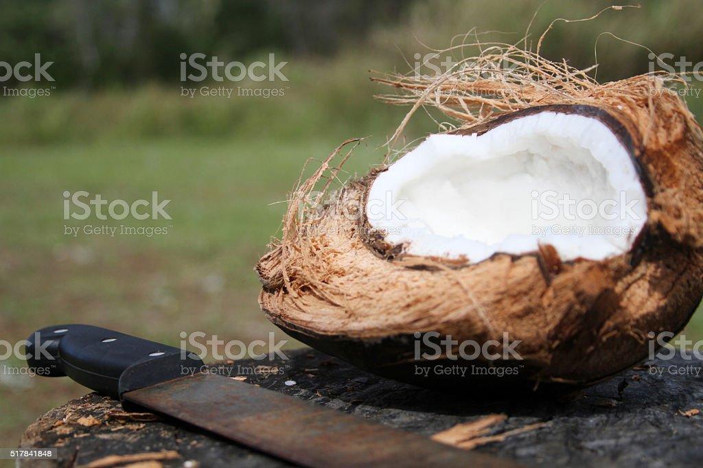 coconut and machete stock photo