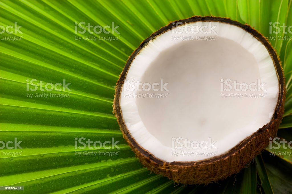 Coconut and palm tree leaf royalty-free stock photo