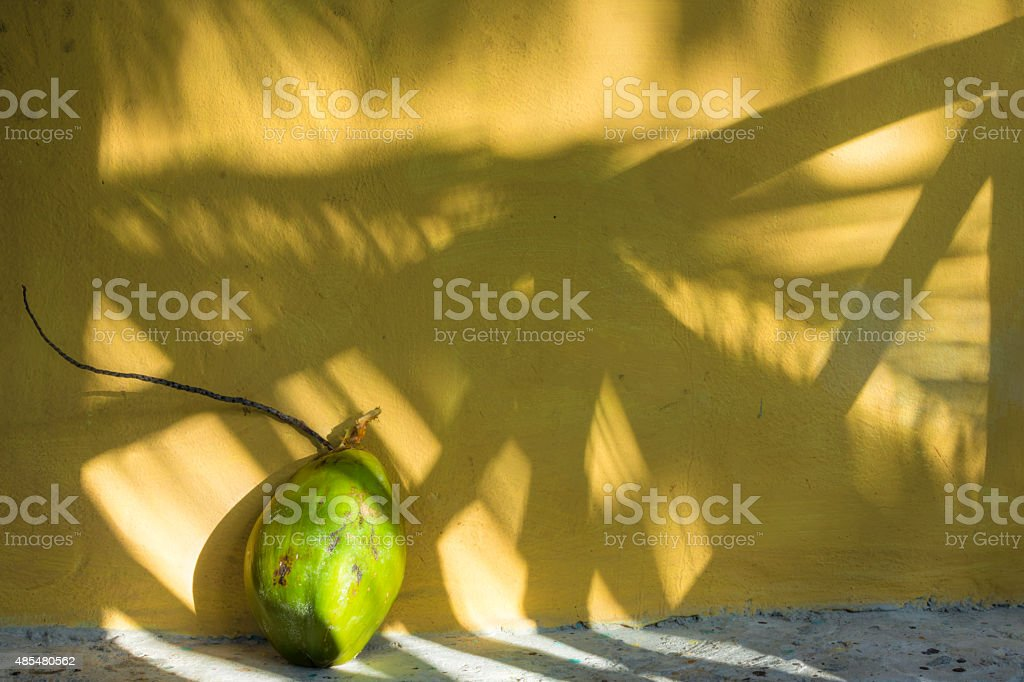 Coconut and shadows in the tropics stock photo