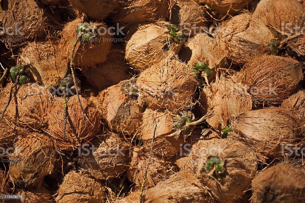 coconut background stock photo