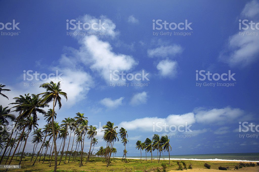 coconut beach stock photo