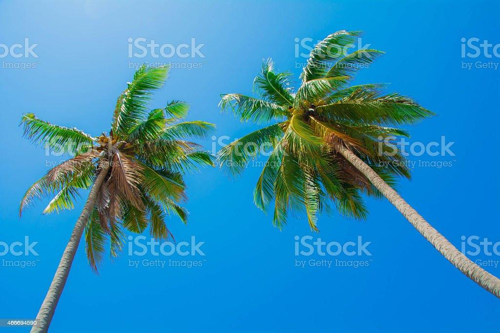 coconut beach Lizenzfreies stock-foto