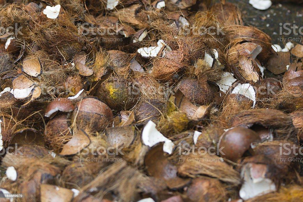 Coconut broken during Ganesha ceromony royalty-free stock photo