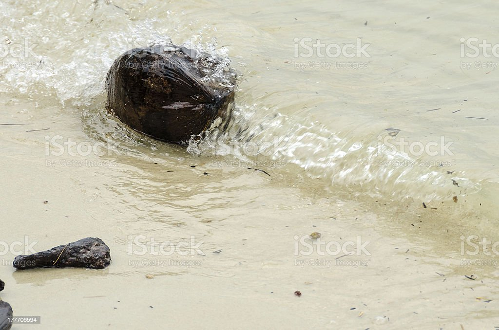 Coconut Carried in a Wave royalty-free stock photo