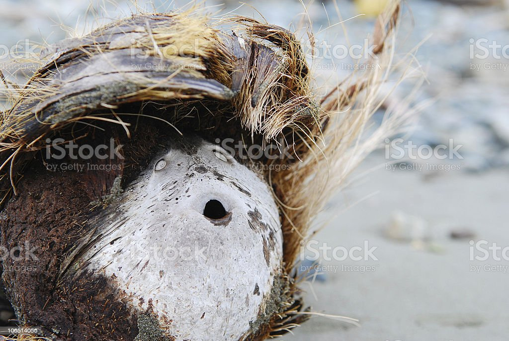 Coconut face on beach royalty-free stock photo