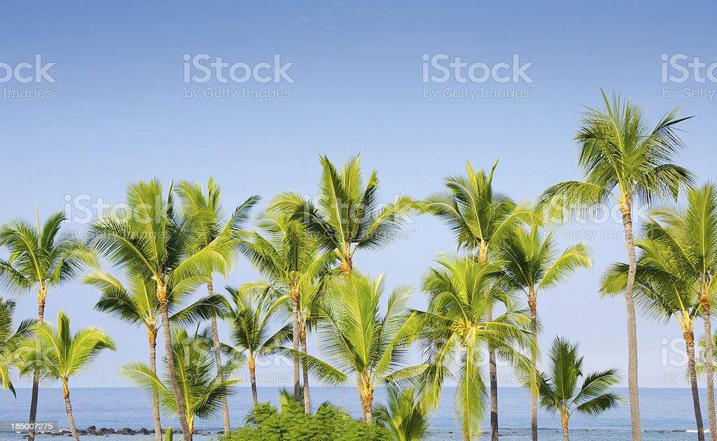 Coconut Grove -Tropical Hawaii stock photo